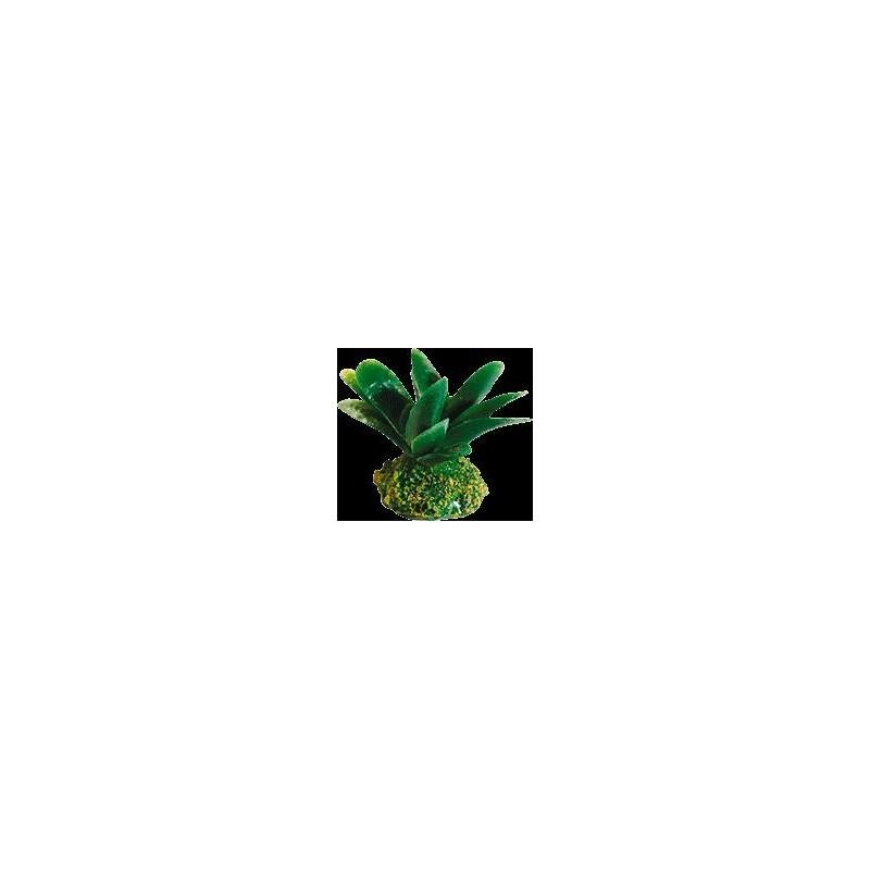 DEC.SILIC.ALGA BANANA 8x6 5x7 ´8 CM